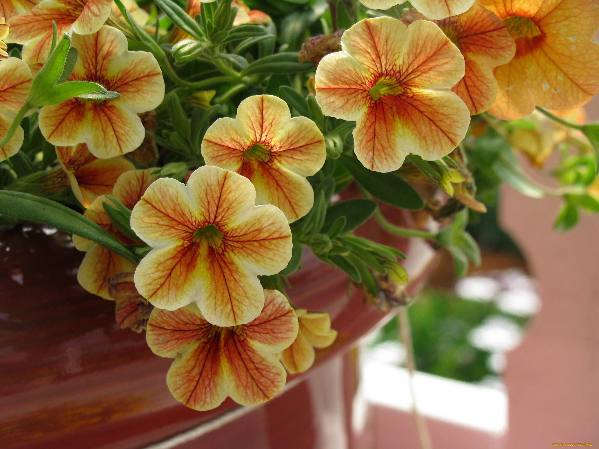 Цветы на п фото